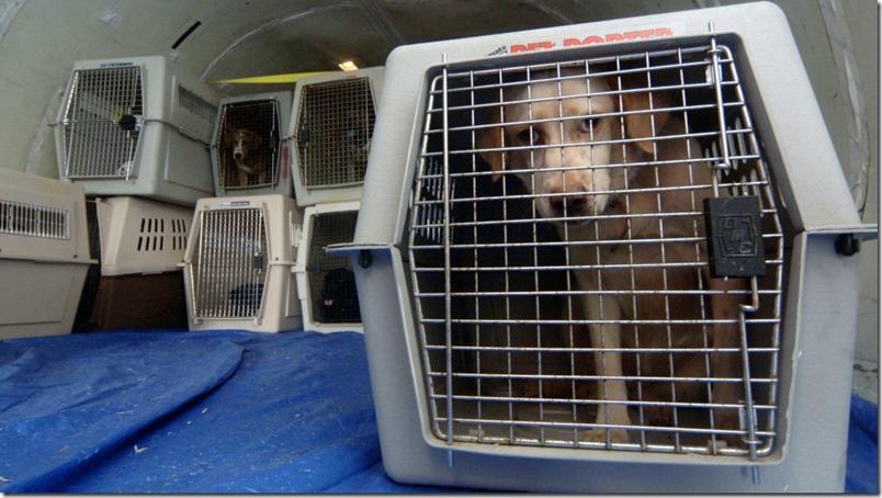 emigrar-mascotas-ecuador