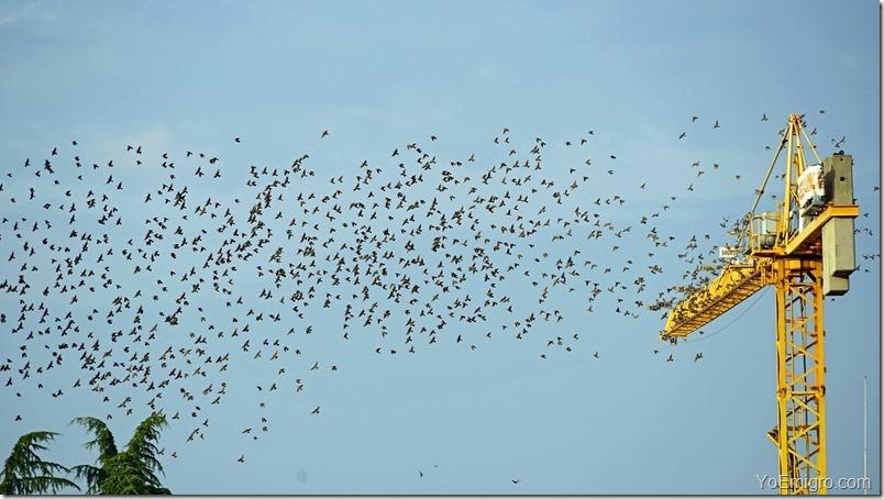 fotos-migracion-golondrinas